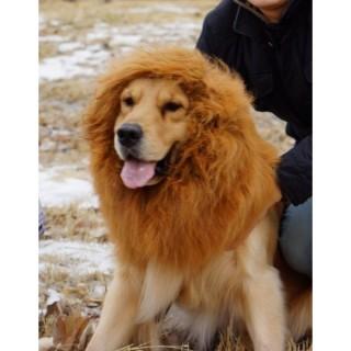 chapeau-lion-pour-chien